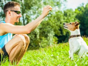 Keeping Your Dog Trim and Trained